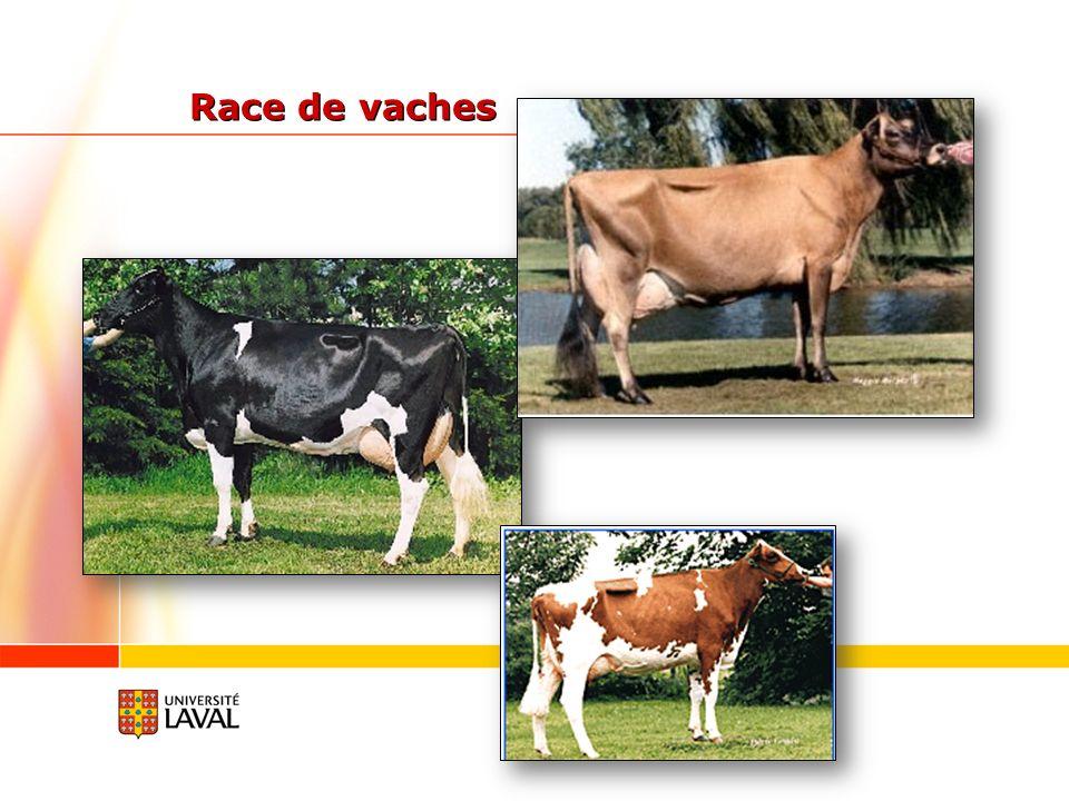 Race de vaches