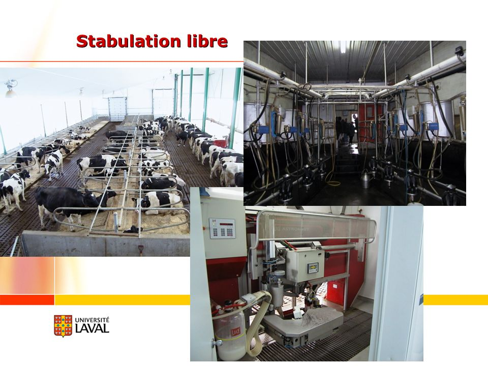 Stabulation libre