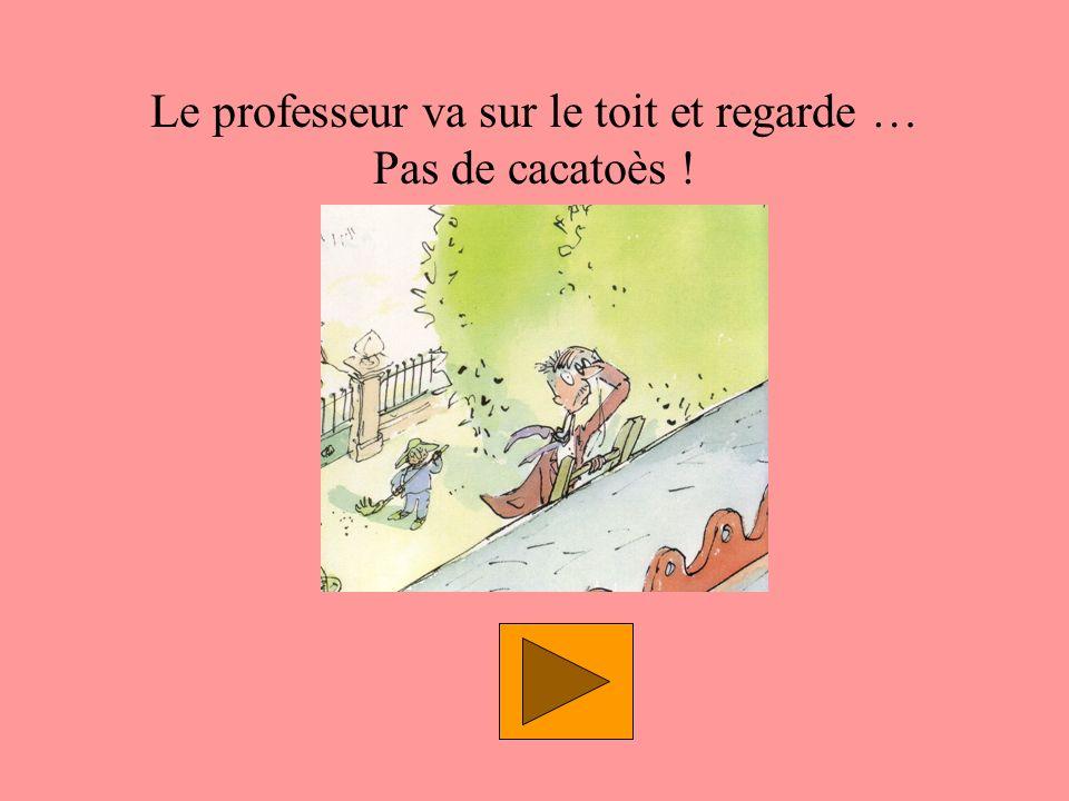 Le professeur va sur le toit et regarde … Pas de cacatoès !