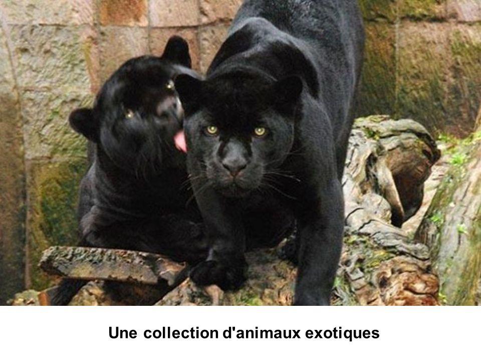 Une collection d animaux exotiques