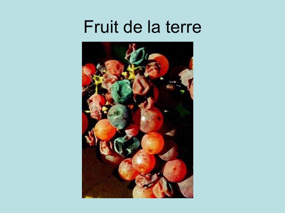 Fruit de la terre