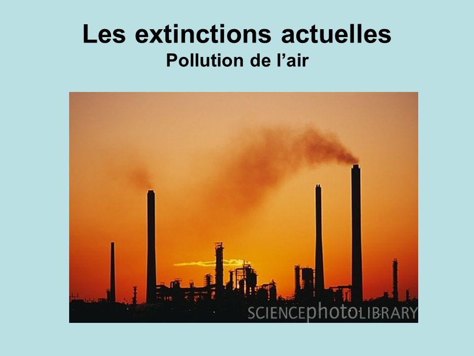Les extinctions actuelles Pollution de l'air