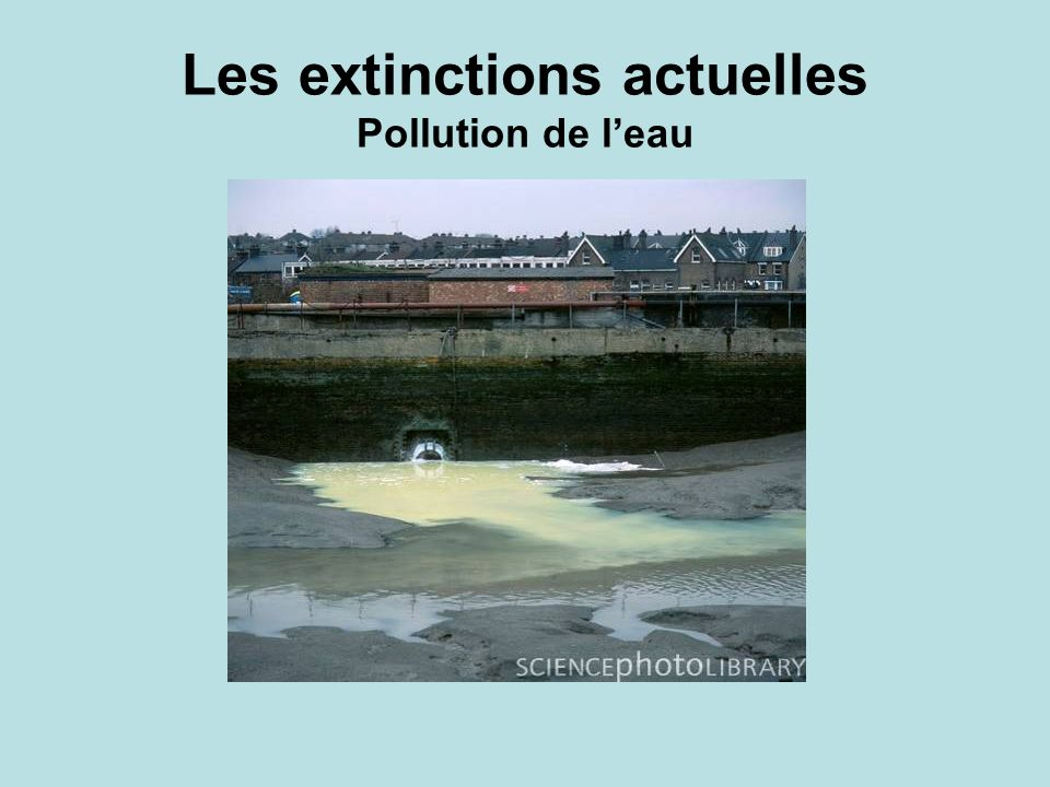 Les extinctions actuelles Pollution de l'eau