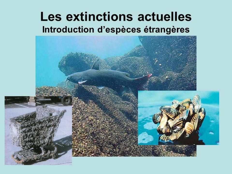 Les extinctions actuelles Introduction d'espèces étrangères