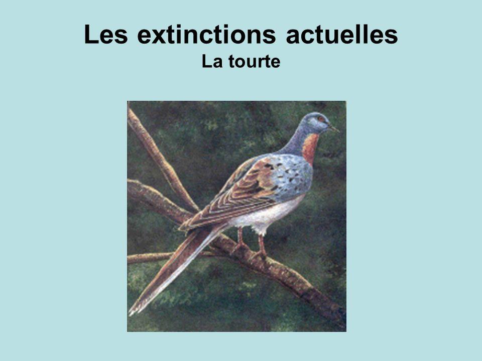 Les extinctions actuelles La tourte