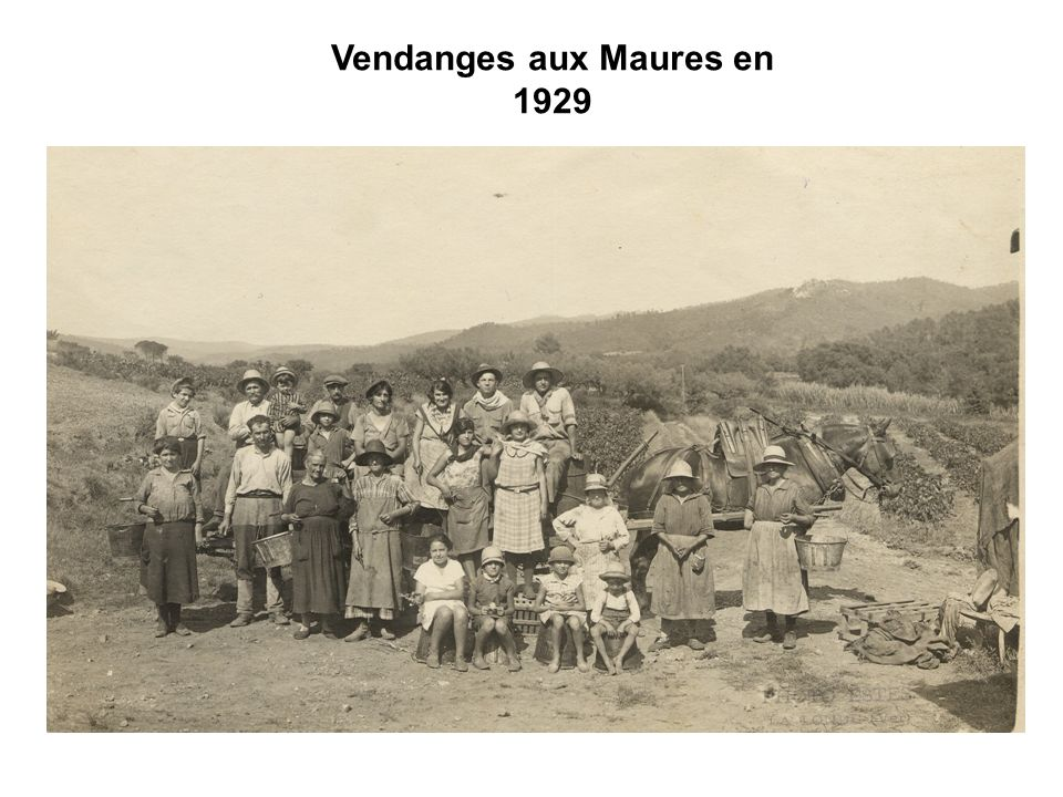 Vendanges aux Maures en 1929