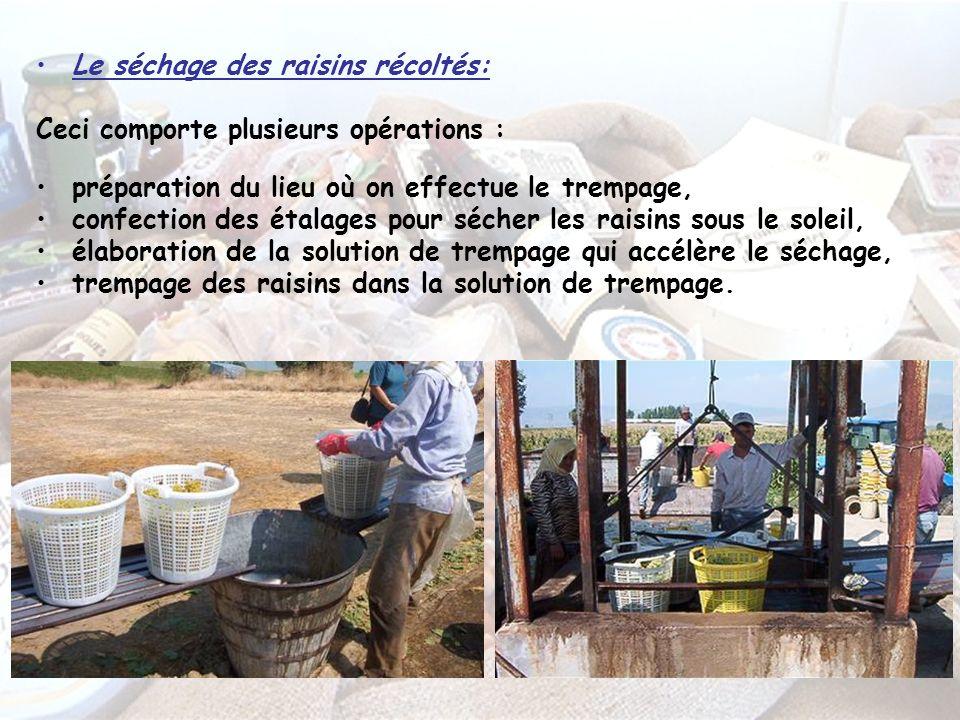 Le séchage des raisins récoltés: