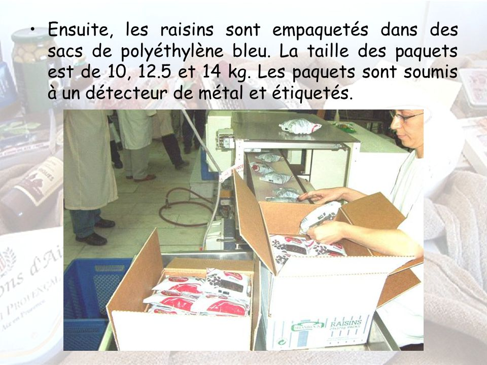 Ensuite, les raisins sont empaquetés dans des sacs de polyéthylène bleu.
