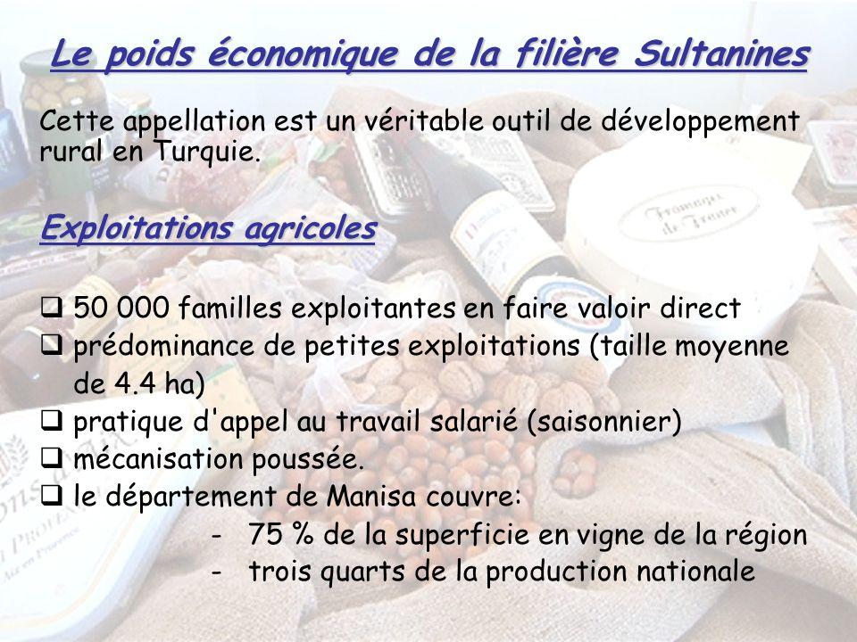 Le poids économique de la filière Sultanines