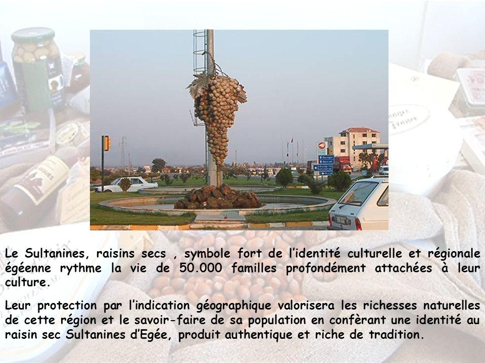 Le Sultanines, raisins secs , symbole fort de l'identité culturelle et régionale égéenne rythme la vie de 50.000 familles profondément attachées à leur culture.