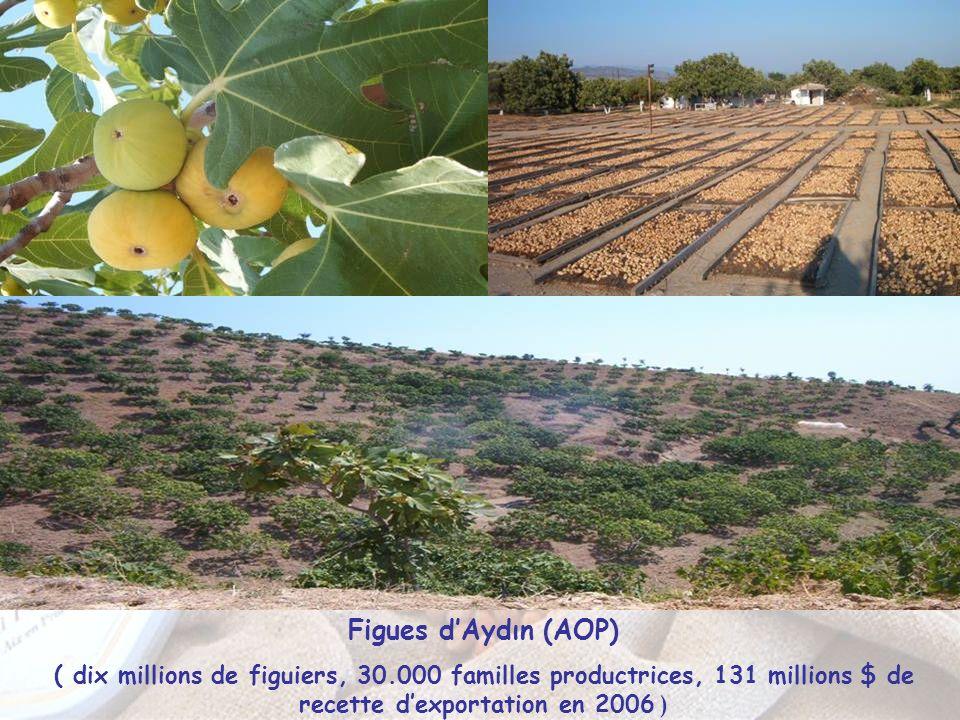 Figues d'Aydın (AOP) ( dix millions de figuiers, 30.000 familles productrices, 131 millions $ de recette d'exportation en 2006 )