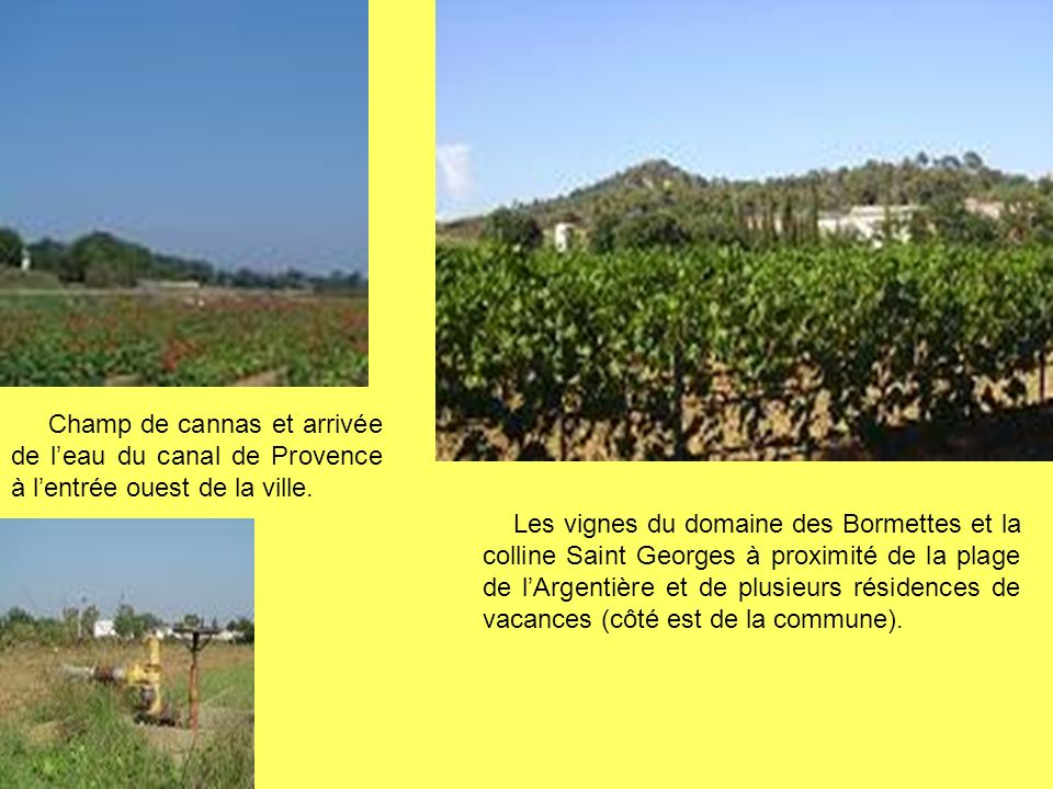 Champ de cannas et arrivée de l'eau du canal de Provence à l'entrée ouest de la ville.