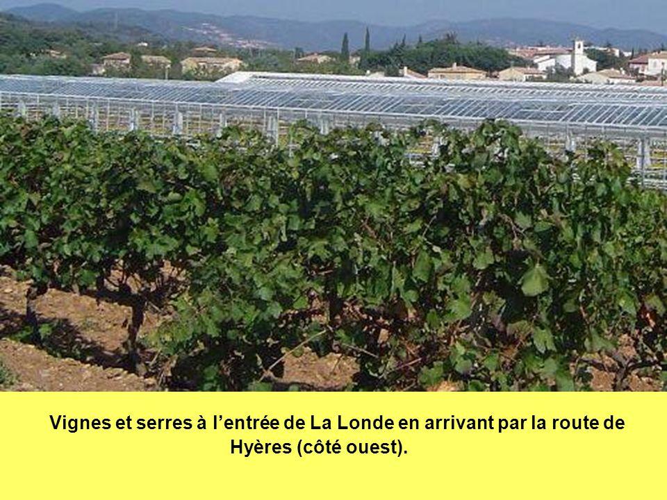 Vignes et serres à l'entrée de La Londe en arrivant par la route de Hyères (côté ouest).