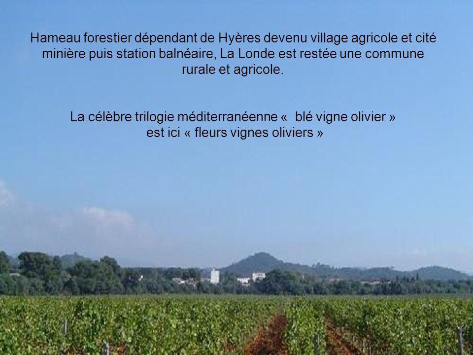 Hameau forestier dépendant de Hyères devenu village agricole et cité minière puis station balnéaire, La Londe est restée une commune rurale et agricole.