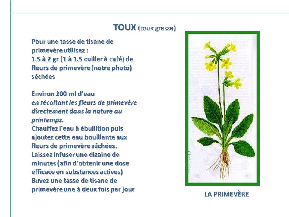 TOUX (toux grasse)