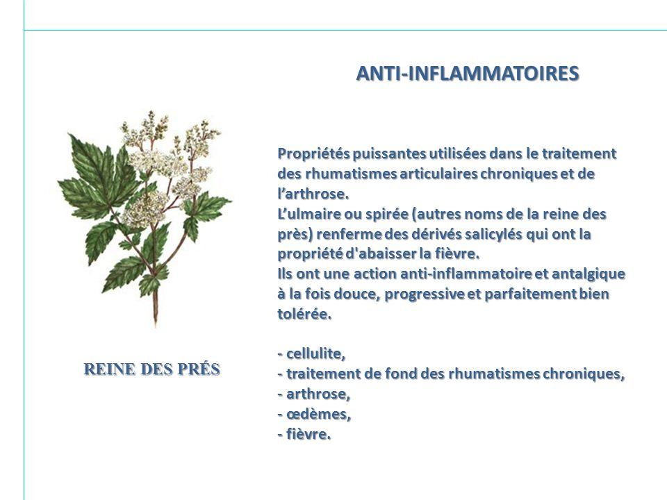 ANTI-INFLAMMATOIRES Propriétés puissantes utilisées dans le traitement des rhumatismes articulaires chroniques et de l'arthrose.