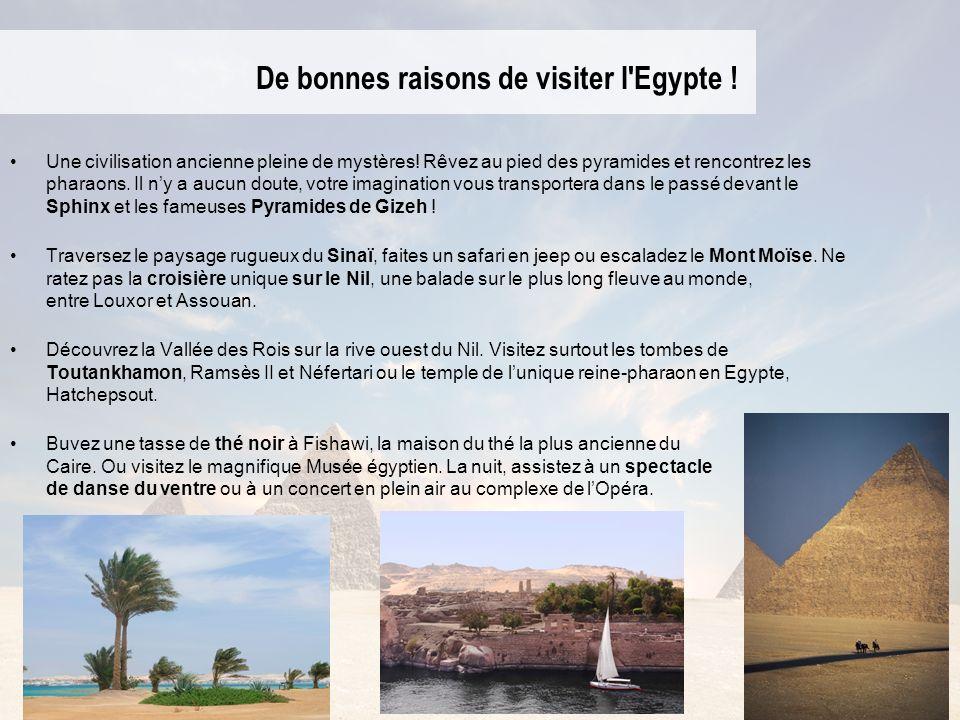 De bonnes raisons de visiter l Egypte !