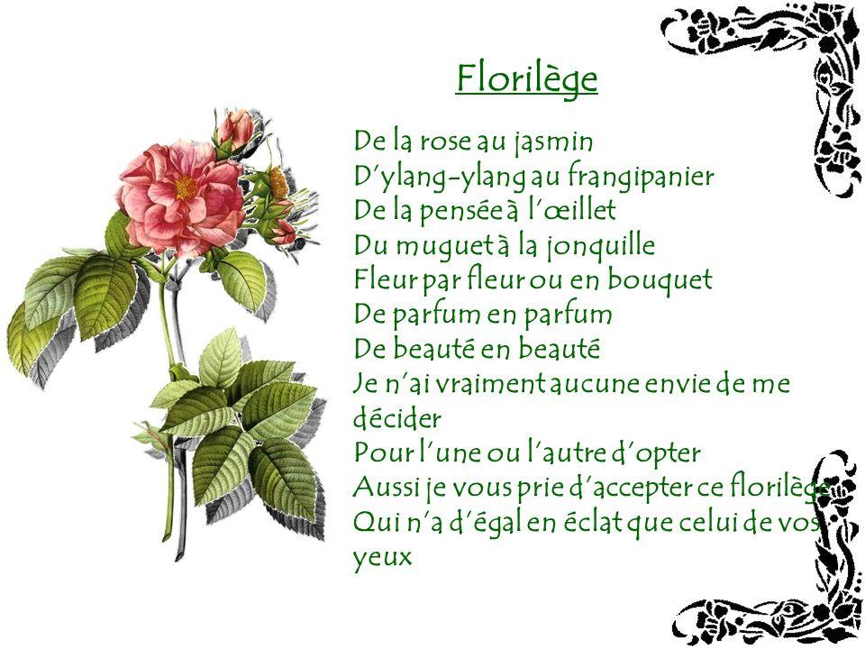 Florilège De la rose au jasmin D'ylang-ylang au frangipanier