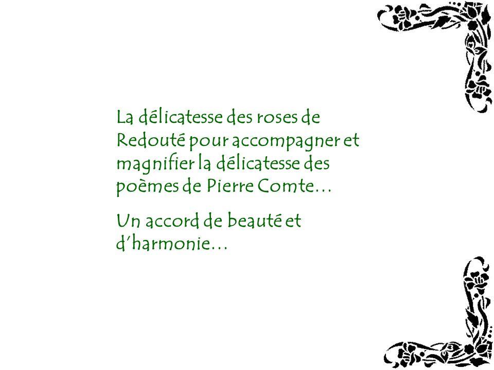 La délicatesse des roses de Redouté pour accompagner et magnifier la délicatesse des poèmes de Pierre Comte…