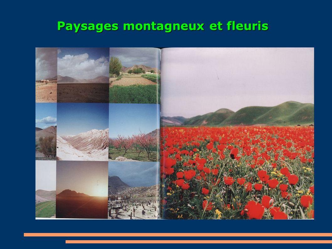 Paysages montagneux et fleuris