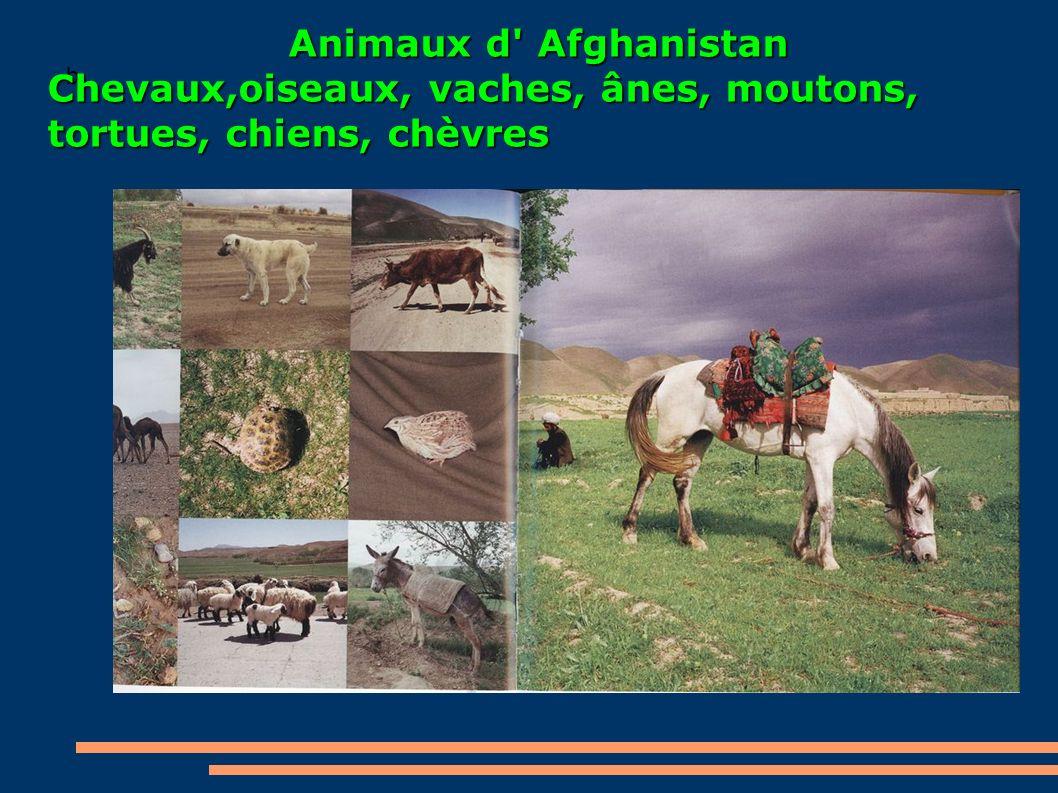 Chevaux,oiseaux, vaches, ânes, moutons, tortues, chiens, chèvres