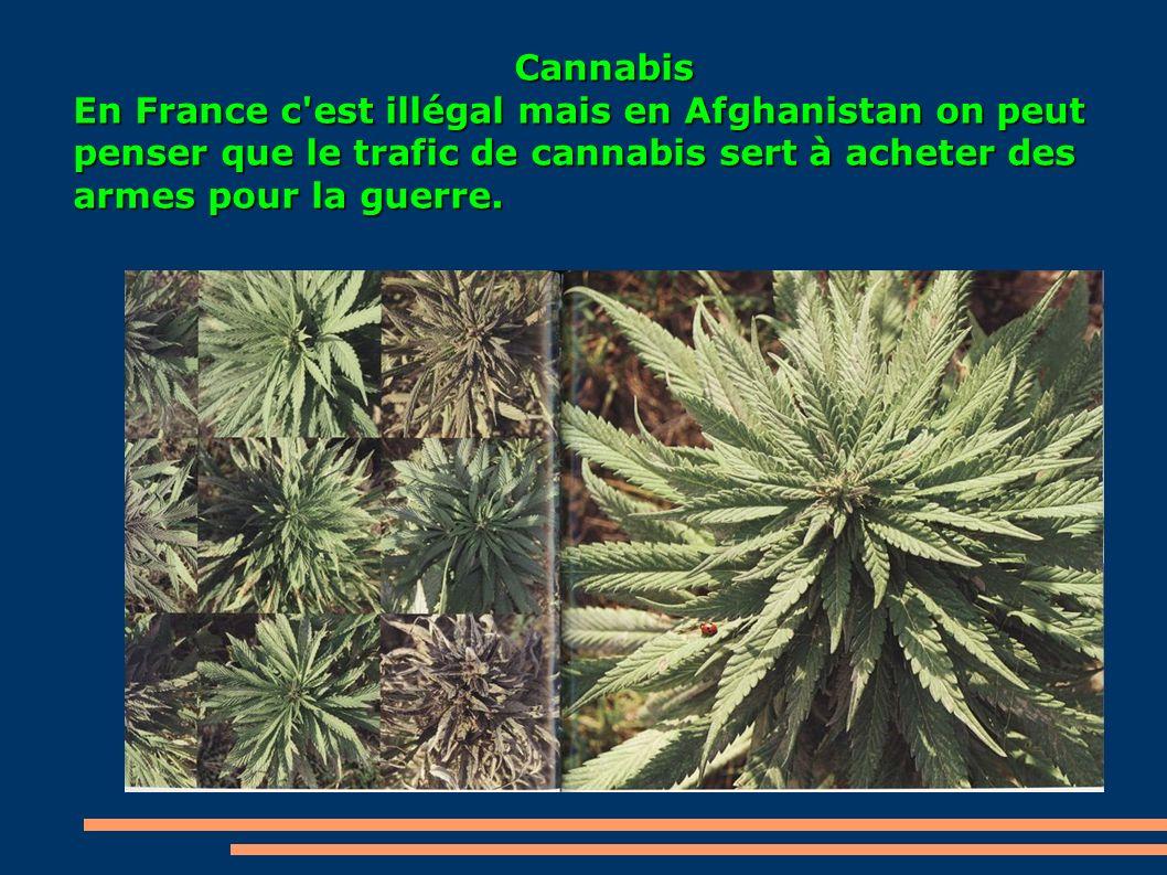 Cannabis En France c est illégal mais en Afghanistan on peut penser que le trafic de cannabis sert à acheter des armes pour la guerre.