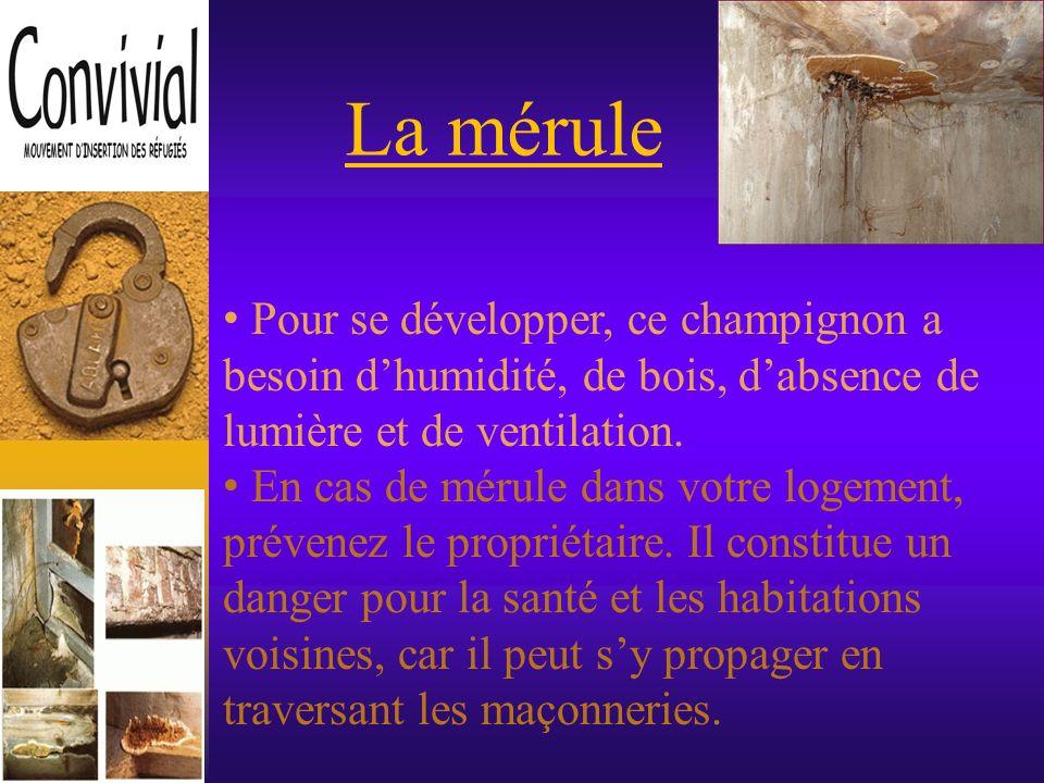 La mérule Pour se développer, ce champignon a besoin d'humidité, de bois, d'absence de lumière et de ventilation.