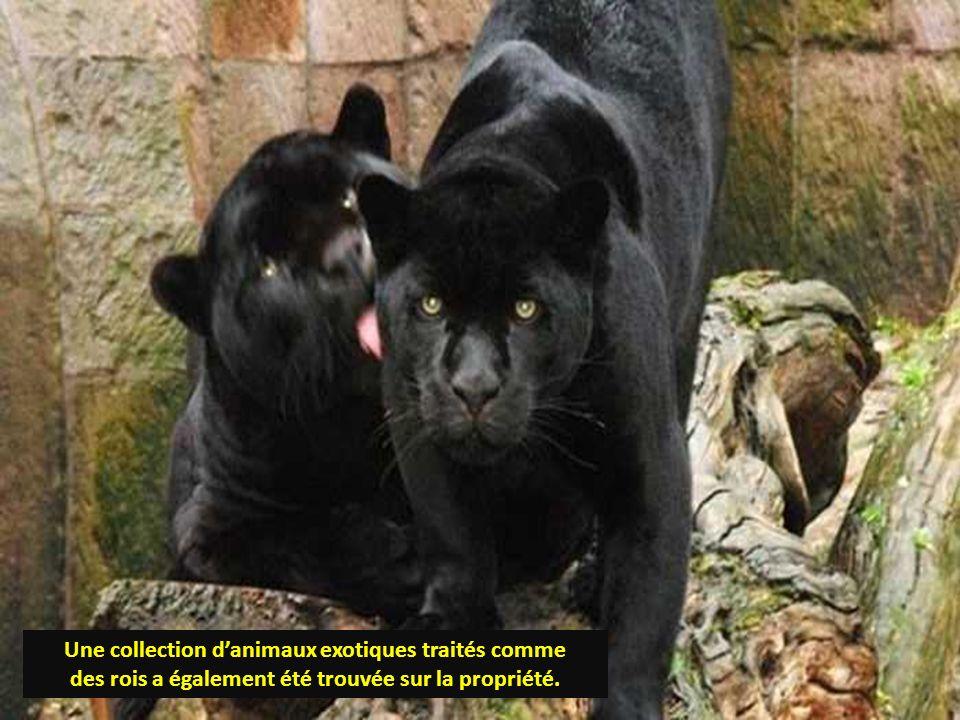 Une collection d'animaux exotiques traités comme