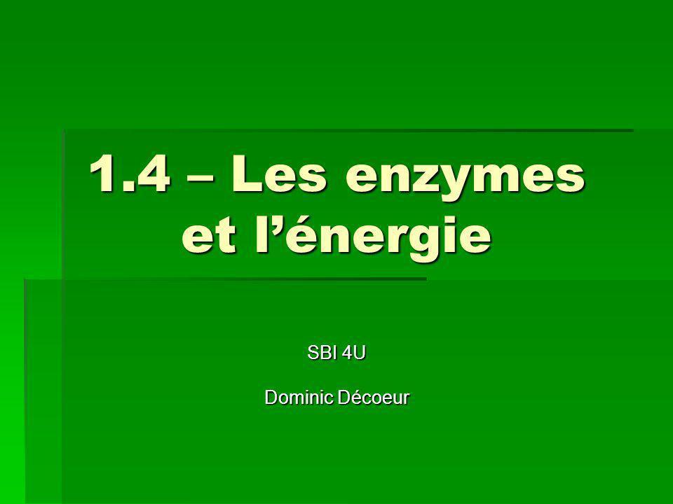 1.4 – Les enzymes et l'énergie