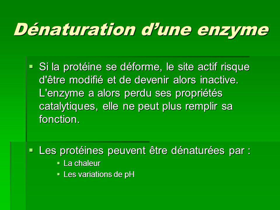 Dénaturation d'une enzyme