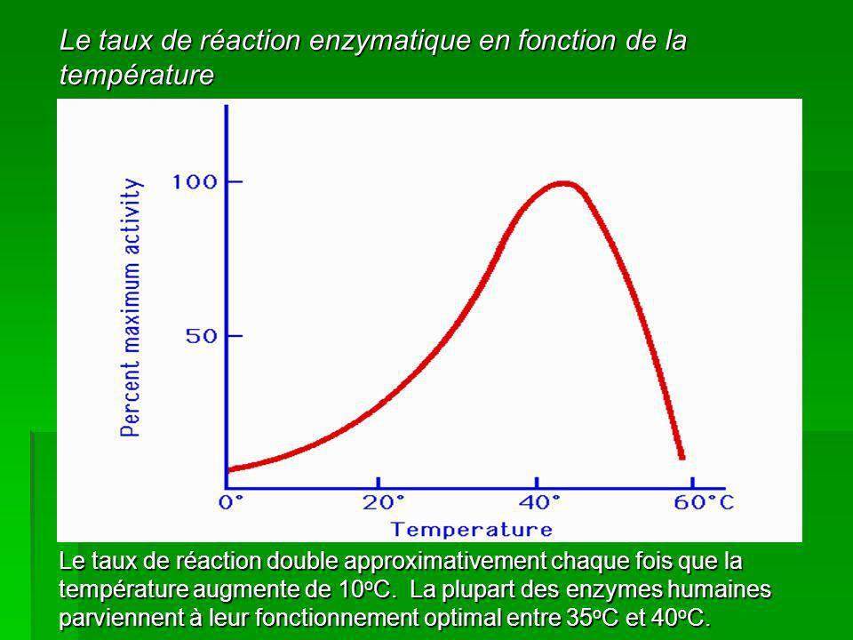 Le taux de réaction enzymatique en fonction de la température