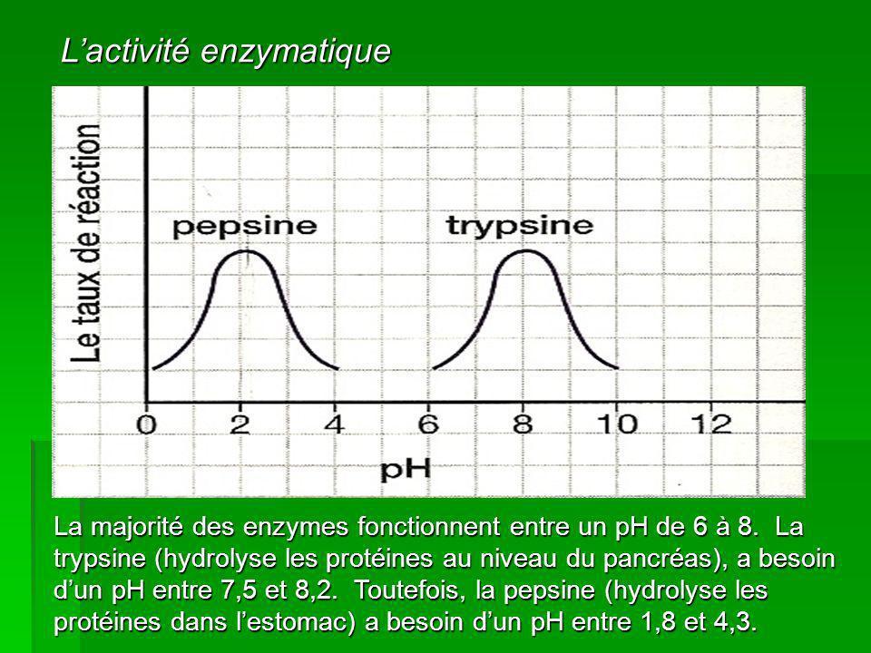 L'activité enzymatique