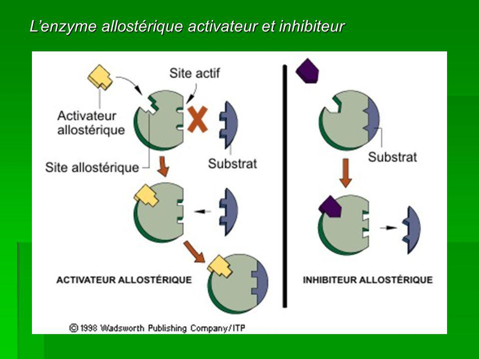 L'enzyme allostérique activateur et inhibiteur