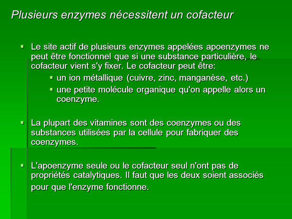Plusieurs enzymes nécessitent un cofacteur