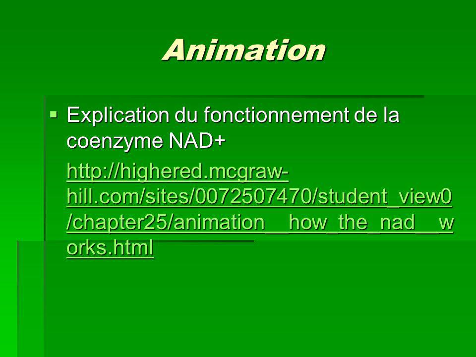 Animation Explication du fonctionnement de la coenzyme NAD+