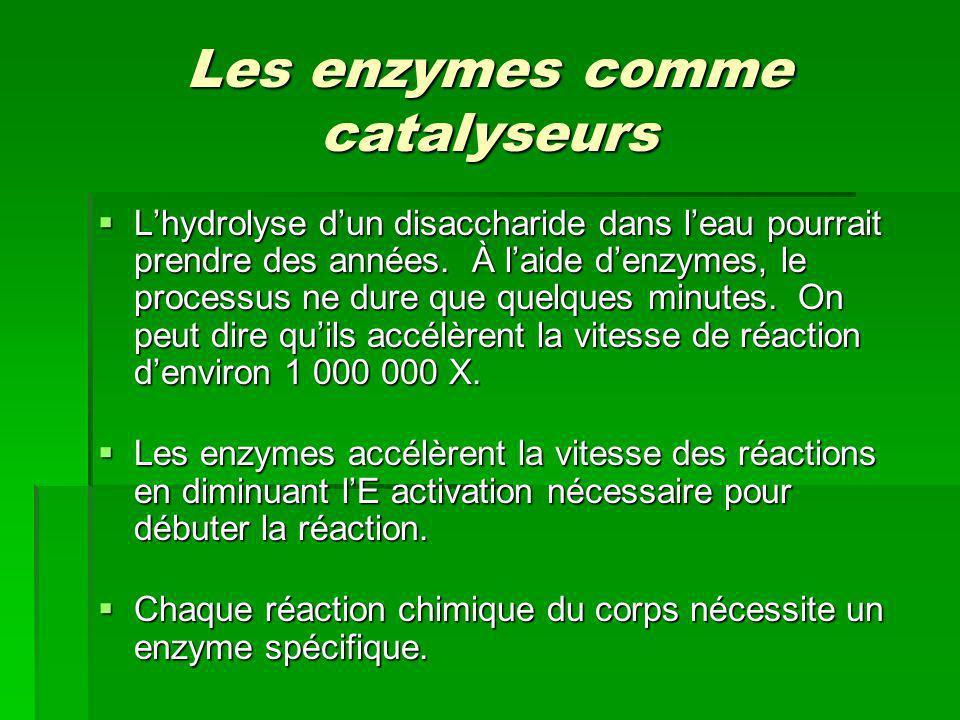 Les enzymes comme catalyseurs
