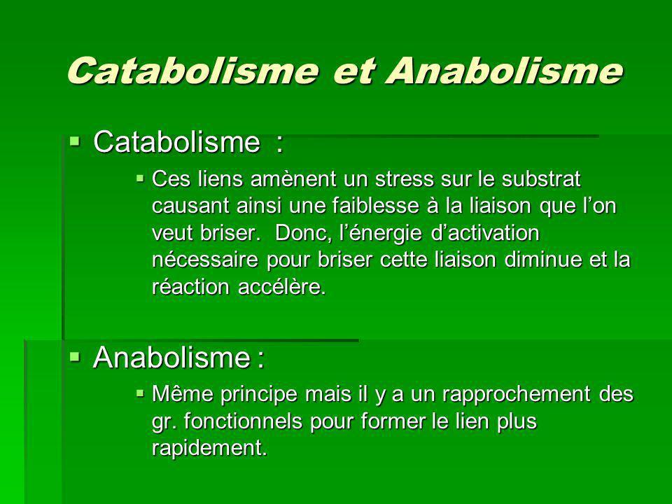 Catabolisme et Anabolisme