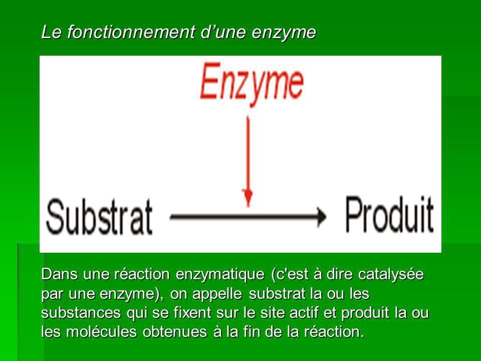 Le fonctionnement d'une enzyme