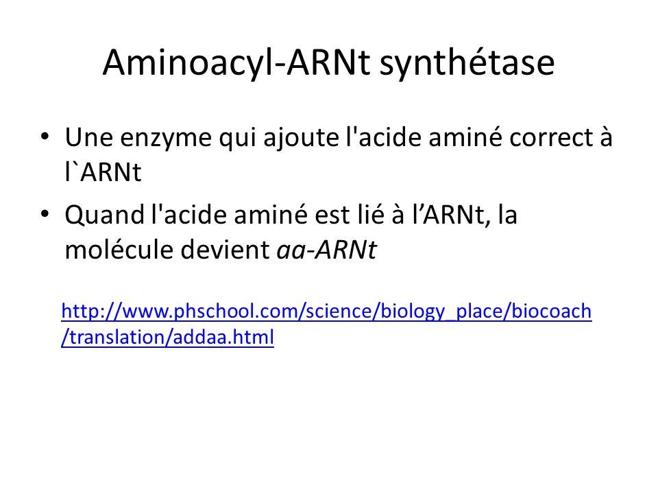 Aminoacyl-ARNt synthétase