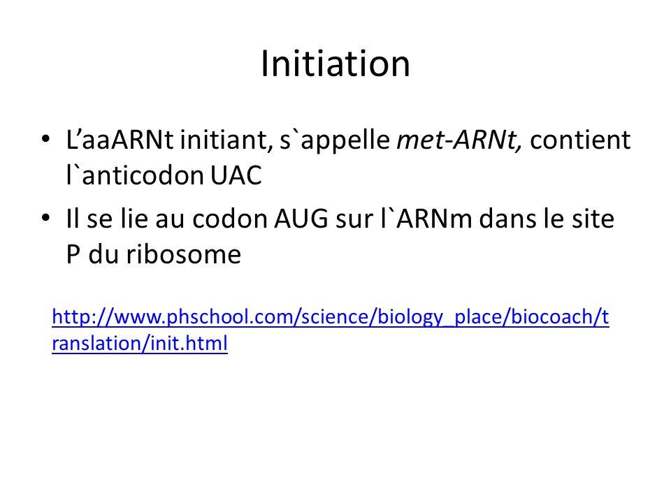 Initiation L'aaARNt initiant, s`appelle met-ARNt, contient l`anticodon UAC. Il se lie au codon AUG sur l`ARNm dans le site P du ribosome.