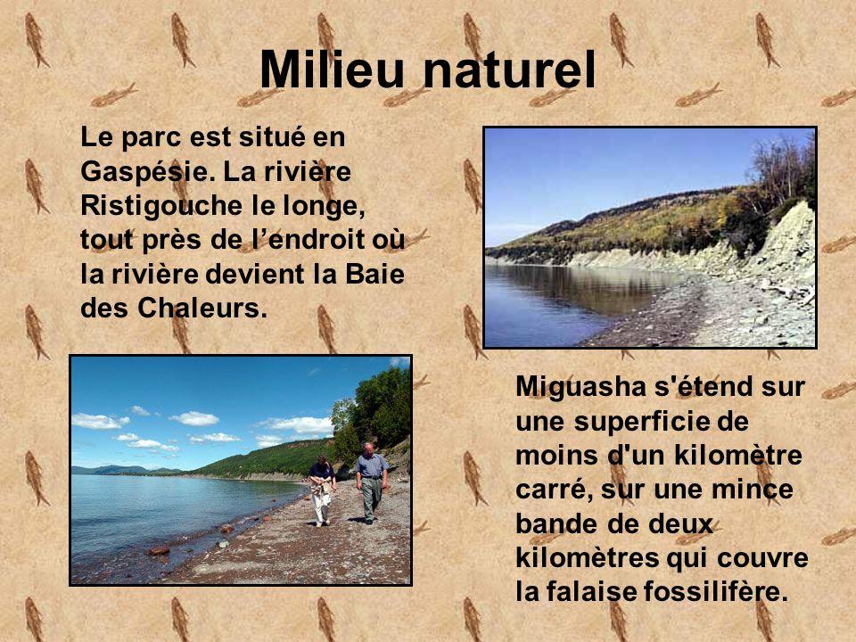 Milieu naturel Le parc est situé en Gaspésie. La rivière Ristigouche le longe, tout près de l'endroit où la rivière devient la Baie des Chaleurs.