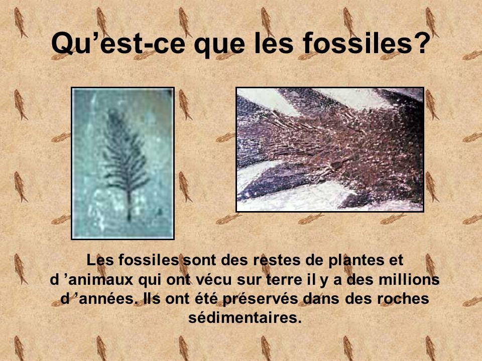 Qu'est-ce que les fossiles