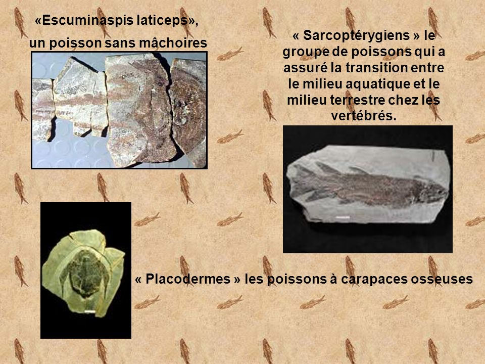 «Escuminaspis laticeps», un poisson sans mâchoires