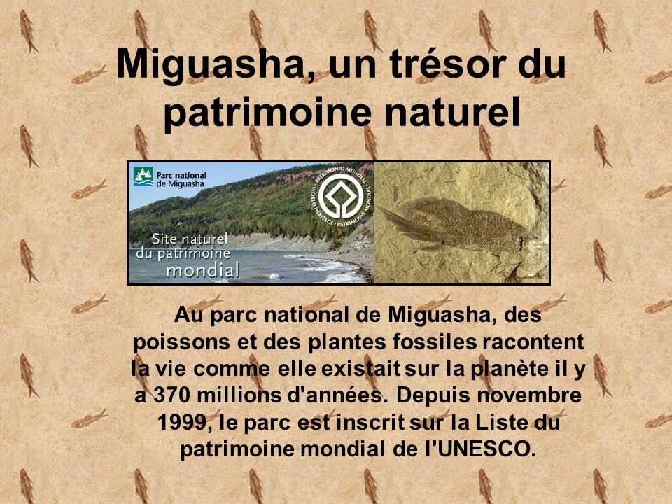 Miguasha, un trésor du patrimoine naturel