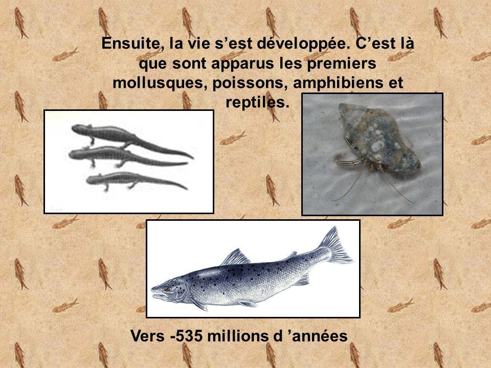 Vers -535 millions d 'années