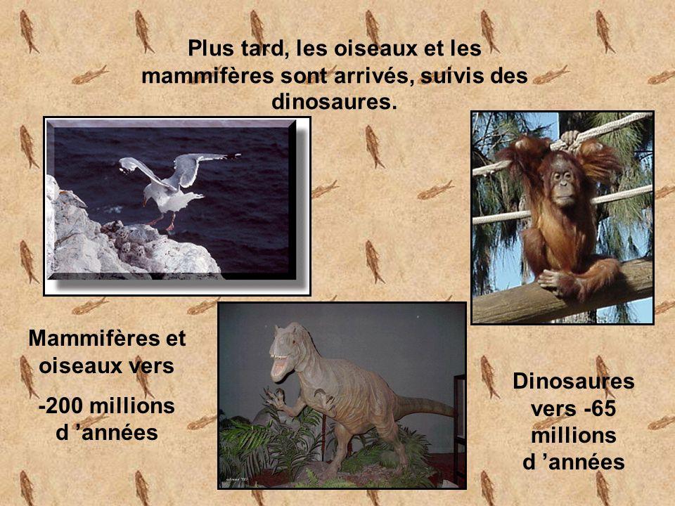 Mammifères et oiseaux vers Dinosaures vers -65 millions d 'années