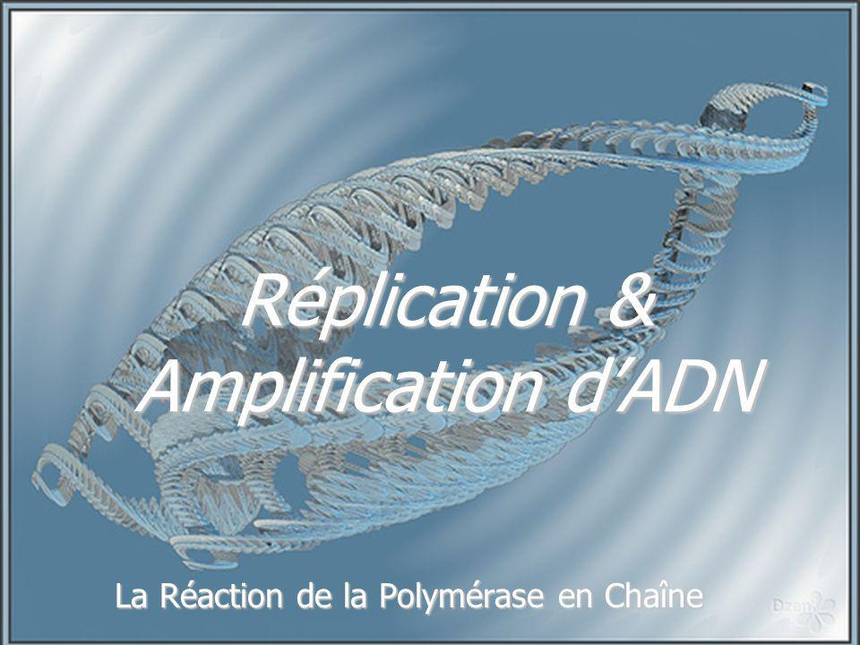 Réplication & Amplification d'ADN