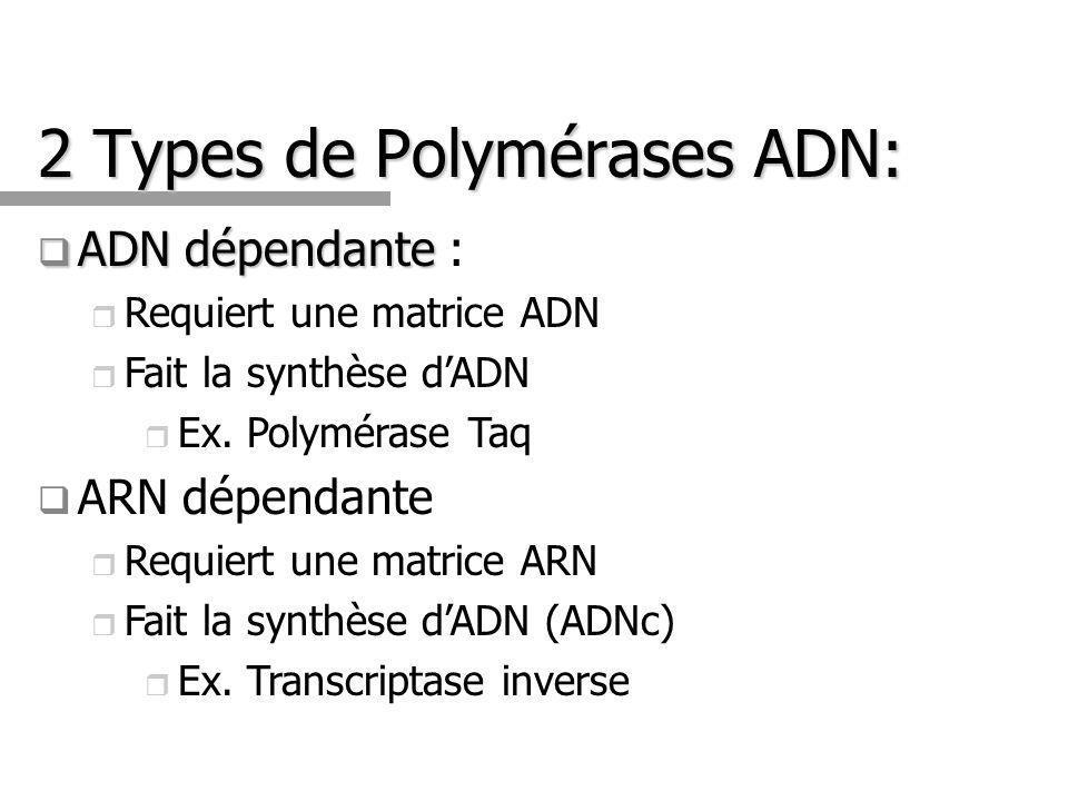 2 Types de Polymérases ADN: