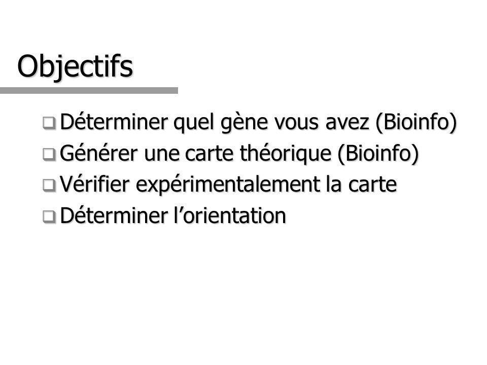Objectifs Déterminer quel gène vous avez (Bioinfo)