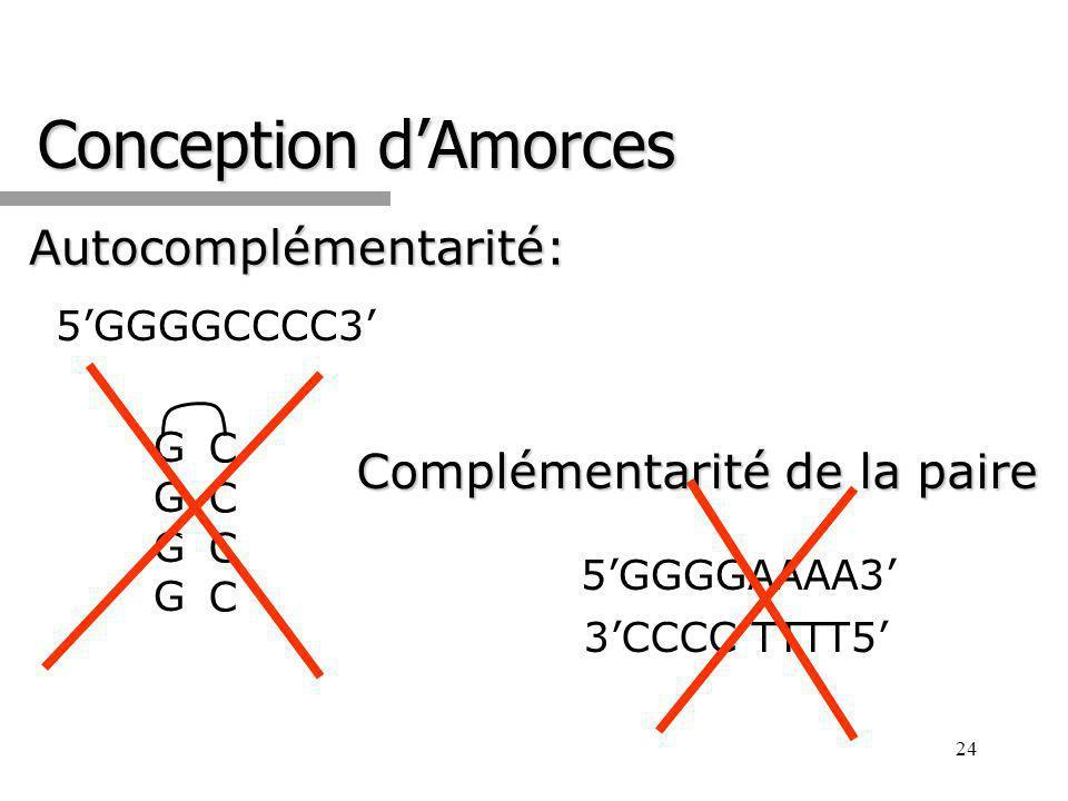 Conception d'Amorces Autocomplémentarité: Complémentarité de la paire